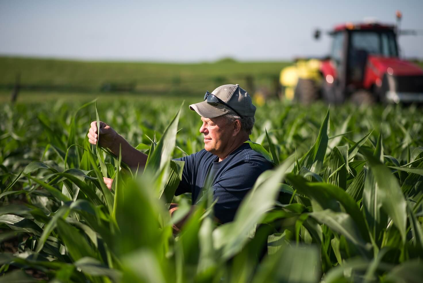 The 2019 Innovation Grant Program RFP is open for Minnesota's corn