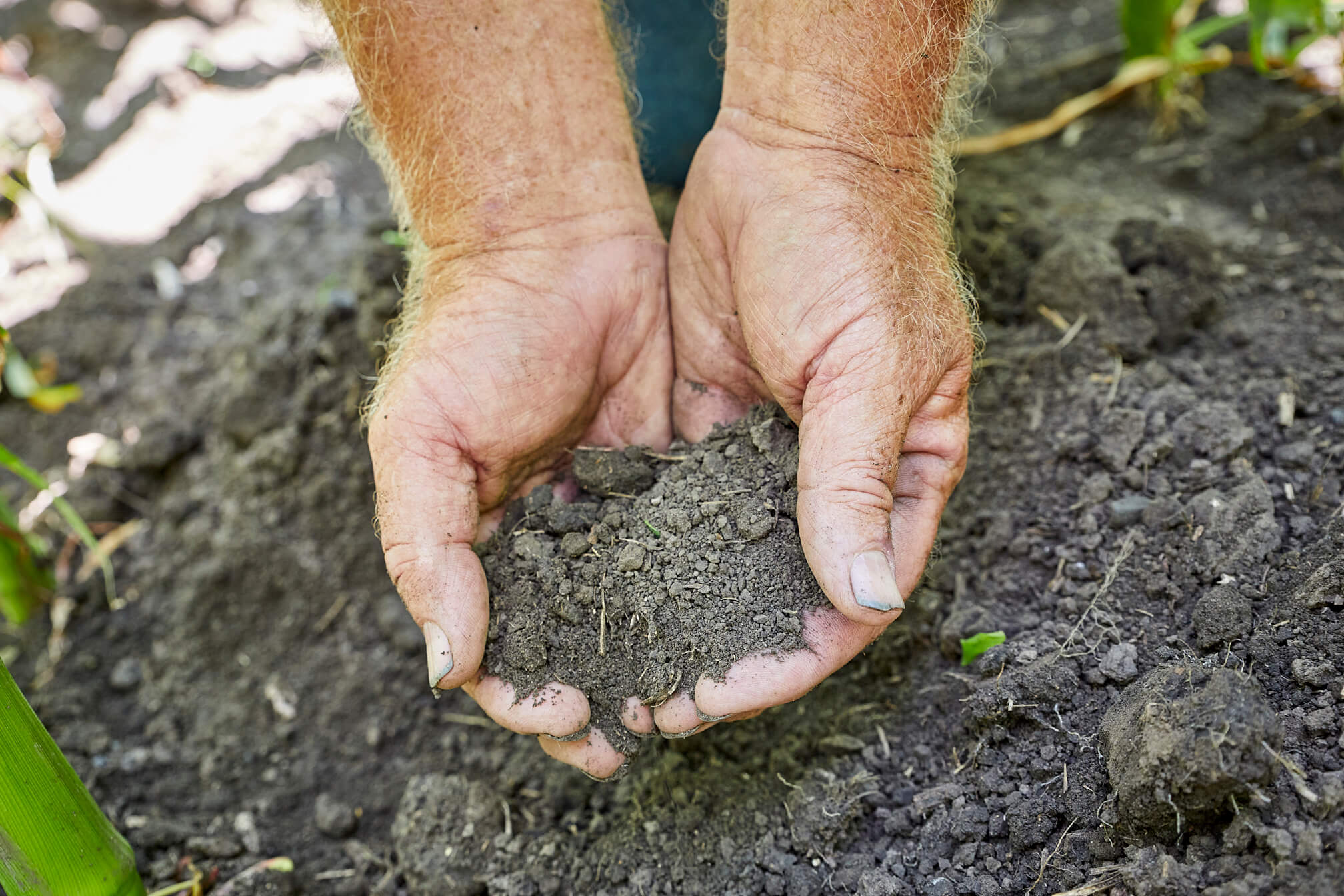 Image result for soil field day image